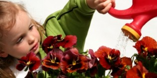 Eco-Friendly Products for Gardening