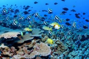 ocean_conservation-01