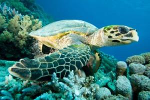 ocean_conservation-02