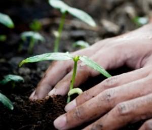 Beginner-Gardeners