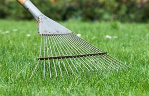 lawn-organic