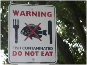 fish-contaminated