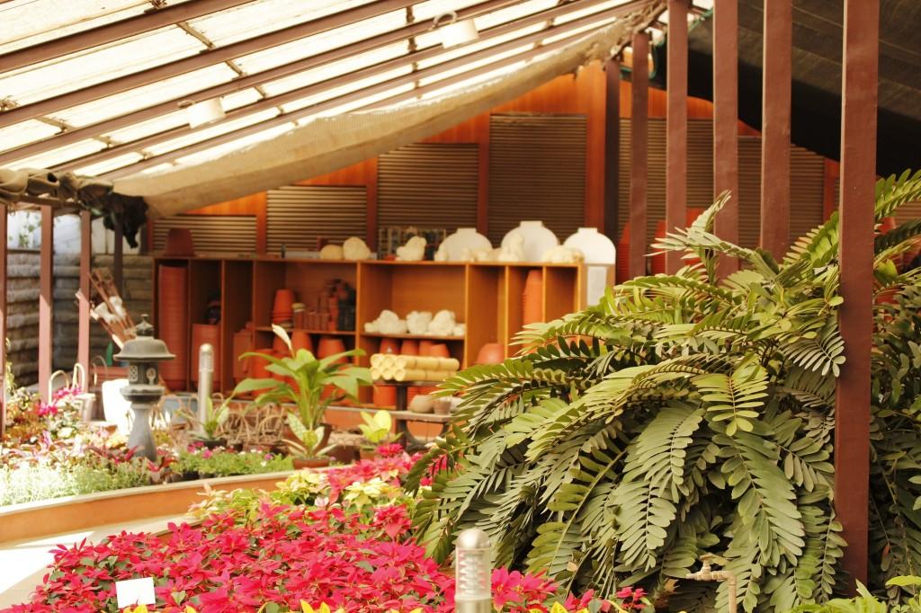 How to make a fresh herbs indoor garden this winter season the herbal garden workwithnaturefo
